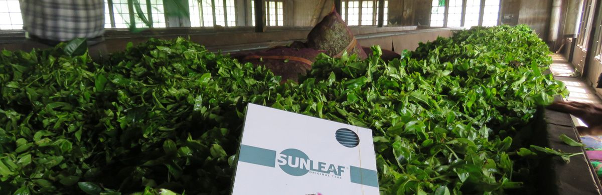 About Sunleaf